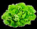 листья салата, зеленый лист, lettuce leaves, green leaf, salat, grünes blatt, laitue, feuille verte, lechuga, hoja verde, lattuga, foglia verde, alface, folha verde