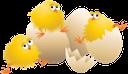 желтый цыпленок, птицы, разбитое яйцо, скорлупа яиц, вылупившиеся цыплята, yellow chicken, birds, broken egg, eggshell, hatched chickens, gelbes küken, vogel, zerbrochenes ei, eierschale, geschlüpften küken, poussin jaune, oiseau, oeuf cassé, coquille d'oeuf, poussins éclos, polluelo amarillo, aves, huevos rotos, cáscara de huevo, pollos nacidos, giallo pulcino, uccello, uovo rotto, guscio d'uovo, pulcini nati, pintainho amarelo, pássaro, ovo quebrado, casca de ovo, pintos nascidos, жовтий курча, птиці, розбите яйце, шкаралупа яєць, вилупилися курчата