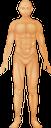 тело человека, анатомия, медицина, строение тела, human body, anatomy, medicine, body structure, menschlicher körper, medizin, körperstruktur, corps humain, anatomie, médecine, structure du corps, cuerpo humano, anatomía, estructura del cuerpo, corpo umano, struttura corporea, corpo humano, anatomia, medicina, estrutura do corpo, тіло людини, анатомія, будова тіла