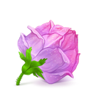 box, flower