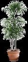 комнатная пальма, зеленое растение, вазон, декоративная пальма, indoor palm tree, green plant, flower pot, ornamental palm tree, schlafzimmer palme, grüne pflanze, topf, dekorative baum, paume de chambre, plante verte, pot, arbre décoratif, palma dormitorio, árbol decorativo, camera da letto di palma, pianta verde, vaso, albero decorativo, quarto palma, planta verde, pote, árvore decorativa