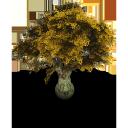 tree, дерево