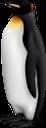 пингвин, королевский пингвин, императорский пингвин, птицы антарктиды, нелетающая птица, пингвиновые, птицы, king penguin, emperor penguin, königspinguin, kaiserpinguin, antarktisvögel, flugunfähiger vogel, pinguin, vögel, manchot royal, manchot empereur, oiseaux de l'antarctique, oiseau incapable de voler, pingouin, oiseaux, pingüino rey, pingüino emperador, antarctica birds, flightless bird, penguin, birds, pinguino reale, pinguino imperatore, uccelli dell'antartide, uccello incapace di volare, pinguino, uccelli, pinguim-rei, pinguim-imperador, pássaros da antártica, pássaro que não voa, pinguim, pássaros, королівський пінгвін, імператорський пінгвін, птахи антарктиди, нелітаючий птах, пінгвінових, птахи