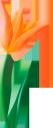 цветок тюльпана, цветы, зеленое растение, флора, tulip, flower tulip, flowers, green plant, tulpe, blumentulpe, blumen, grünpflanze, tulipe, fleur tulipe, fleurs, plante verte, flore, tulipán, tulipán de flores, tulipano, fiore tulipano, fiori, pianta verde, tulipa, flor tulipa, flores, planta verde, flora, тюльпан, квітка тюльпана, квіти, зелена рослина