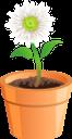ромашка, вазон, цветок ромашки, флористика, цветы, флора, chamomile, flower pot, floristry, flowers, kamille, blumentopf, daisy flower, floristik, blumen, camomille, pot de fleur, fleur de marguerite, fleuristerie, fleurs, flore, manzanilla, maceta, flor de margarita, floristería, camomilla, fioriera, margherita, floristica, fiori, camomila, vaso de flores, flor da margarida, produtos de floricultura, flores, flora, квітка ромашки, квіти