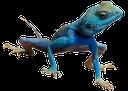 ящерица, рептилия, lizard, eidechse, reptilien, lézard, reptile, reptil, lucertola, rettile, lagarto, réptil