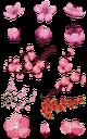 сакура, цветы вишни, розовые цветы, цветущее дерево, весна, ветка вишни, ветка дерева, японская вишня, cherry blossom, cherry blossoms, pink flowers, flowering tree, spring, cherry branch, tree branch, japanese cherry, kirschblüte, kirschblüten, rosa blüten, blühender baum, frühling, kirschzweig, ast, japanische kirsche, fleur de cerisier, fleurs de cerisier, fleurs roses, arbre en fleurs, printemps, branche de cerisier, branche d'arbre, flore, cerise japonaise, flor de cerezo, flores de cerezo, flores rosadas, árbol floreciente, rama de cerezo, rama de árbol, cereza japonesa, fiori di ciliegio, fiori rosa, albero in fiore, ramo di ciliegio, ramo di un albero, ciliegio giapponese, flor de cerejeira, flores de cerejeira, flores rosa, árvore florida, primavera, ramo de cereja, ramo de árvore, flora, cereja japonesa, квіти вишні, рожеві квіти, квітуче дерево, гілка вишні, гілка дерева, флора, японська вишня