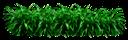 декоративная трава, зеленая трава, зеленое растение, green grass, green plant, grünes gras, grünpflanze, herbe verte, plante verte, hierba verde, erba verde, pianta verde, grama verde, planta verde
