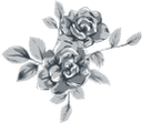 роза, цветок розы, цветы, флора, flower roses, flowers, blumenrosen, blumen, fleurs roses, fleurs, flore, flores rosas, rosa, fiori rose, fiori, rose, flor rosas, flores, flora, троянда, квітка троянди, квіти