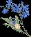 цветы, синий цветок, васильки, полевые цветы, флора, flowers, blue flower, wildflowers, blumen, blaue blume, kornblumen, wildblumen, fleurs, fleur bleue, bleuets, fleurs sauvages, flore, flor azul, acianos, fiori, fiore blu, fiordalisi, fiori di campo, flores, flores azuis, cornflowers, flores silvestres, flora, квіти, синя квітка, волошки, польові квіти