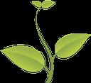 зеленый лист, green leaf, зелений лист, росток, зеленое растение, leaf of a tree, sprout, green plant, grünes blatt, baum, blatt, sprießen, grüne pflanze, feuille verte, feuille d'arbre, pousse, plante verte, hoja verde, hoja del árbol, brote, foglia verde, albero a foglia, germoglio, pianta verde, folha verde, folha da árvore, broto, planta verde, лист дерева, паросток, зелена рослина