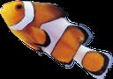 рыба клоун, яркая рыбка, красивая рыба, морская рыба, красивая рыбка, fish clown, sea fish, beautiful fish, clownfische, seefische, schöne fische, poissons clown, poissons d'eau salée, de beaux poissons, peces payaso, peces de agua salada, peces precioso, pesci pagliaccio, pesci di mare, bellissimo pesce, peixe-palhaço, peixes de água salgada, peixes bonitos