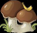 лесные грибы, белый гриб, wild mushrooms, white mushroom, pilze, weiß pilz, champignons sauvages, les champignons blancs, setas, hongo blanco, funghi, fungo bianco, cogumelos, fungos selvagens branco, лісові гриби, білий гриб