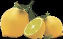 желтый лимон, лимоны, yellow lemon, citrus, lemons, zitronengelb, zitrusfrüchte, zitronen, jaune citron, agrumes, citrons, amarillo limón, cítricos, limones, giallo limone, agrumi, limoni, amarelo limão, citrino, limões, жовтий лимон, цитрус, лимони
