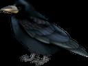 черный ворон, ворона, птица, отряд пернатых, фауна, black raven, crow, bird, feathered squad, schwarzer rabe, krähe, vogel, gefiederter trupp, corbeau noir, corbeau, oiseau, escouade à plumes, faune, cuervo negro, cuervo, pájaro, escuadrón emplumado, corvo nero, uccello, squadra piumata, corvo preto, corvo, pássaro, pelotão de penas, fauna, чорний ворон, птах, загін пернатих
