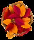 осенняя листва, красный лист, желтый лист, осень, опавшая листва, осенний лист растения, гнездо, птичье гнездо, желуди, жёлудь дуба, природа, fall foliage, red leaf, yellow leaf, fall, fallen leaves, autumn leaf plant, bird's nest, acorns, oak acorn, herbstlaub, rotes blatt, gelbes blatt, herbst, abgefallene blätter, herbstblattpflanze, nest, vogelnest, eicheln, eicheneichel, natur, feuillage d'automne, feuille rouge, feuille jaune, automne, feuilles mortes, plante à feuilles d'automne, nid, nid d'oiseau, glands, gland de chêne, nature, follaje de otoño, hoja roja, hoja amarilla, otoño, hojas caídas, planta de hoja de otoño, nido de pájaro, bellotas, bellota de roble, naturaleza, fogliame autunnale, foglia rossa, foglia gialla, autunno, foglie cadute, pianta foglia d'autunno, nido, nido d'uccello, ghiande, ghianda di quercia, natura, folhagem de outono, folha vermelha, folha amarela, outono, folhas caídas, planta de folha de outono, ninho, ninho de pássaro, bolotas, bolota de carvalho, natureza, осіннє листя, червоний лист, жовтий лист, осінь, опале листя, осінній лист рослини, гніздо, пташине гніздо, жолуді, жолудь дуба