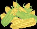 кукуруза, початок кукурузы, маис, желтый, corn, corn cob, maize, yellow, maiskolben, gelb, épi de maïs, maïs, jaune, mazorca de maíz, maíz, amarillo, pannocchia di mais, mais, giallo, espiga de milho, milho, amarelo, кукурудза, качан кукурудзи, маїс, жовтий