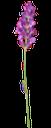 сиреневый цветок, зеленое растение, lilac flower, green plant, violette blume, grüne pflanze, fleur violette, plante verte, verde de plantas, fiore viola, pianta verde, flor violeta, planta verde