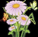 ромашка полевая, бабочка, цветы, field daisy, butterfly, flowers, gänseblümchenfeld, schmetterling, blume, pâquerette, papillon, fleur, campo de la margarita, mariposa, margherita campo, farfalla, fiore, campo da margarida, borboleta, flor, ромашка польова, метелик, квіти