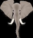 животные, слон, голова слона, африканский слон, индийский слон, animals, elephant, elephant head, african elephant, indian elephant, tiere, elefant, elefantenkopf, afrikanischer elefant, indischer elefant, animaux, éléphant, tête d'éléphant, éléphant d'afrique, éléphant indien, animales, cabeza de elefante, elefante indio, animali, testa di elefante, elefante indiano, animais, elefante, cabeça elefante, elefante africano, elefante índio, тварини, африканський слон, індійський слон