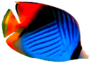 морская рыба, яркая рыба, красивая морская рыба, сине красная рыбка, коралловый риф, sea fish, bright fish, beautiful sea fish, blue red fish, coral reef, meeresfische, bunte fische, schöne meeresfisch, roter fisch blau, korallenriff, poissons de mer, poissons colorés, beaux poissons d'eau de mer, le bleu de poissons rouges, récif corallien, los peces marinos, peces de colores, peces de agua salada hermosa, azul pez rojo, los arrecifes de coral, pesci marini, pesci colorati, bel pesce di mare, pesce rosso blu, barriera corallina, peixes marinhos, peixes coloridos, bonito peixes de água salgada, azul peixe vermelho, recife de coral