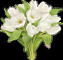 тюльпан, букет цветов, букет тюльпанов, цветы, белые тюльпаны, белые цветы, флора, весна, tulip, bouquet of flowers, bouquet of tulips, flowers, white tulips, white flowers, spring, tulpe, blumenstrauß, blumenstrauß von tulpen, blumen, weiße tulpen, weiße blumen, frühling, tulipe, bouquet de fleurs, bouquet de tulipes, fleurs, tulipes blanches, fleurs blanches, flore, printemps, tulipán, ramo de flores, ramo de tulipanes, tulipanes blancos, flores blancas, tulipano, bouquet di fiori, bouquet di tulipani, fiori, tulipani bianchi, fiori bianchi, tulipa, buquê de flores, buquê de tulipas, flores, tulipas brancas, flores brancas, flora, primavera, букет квітів, букет тюльпанів, квіти, білі тюльпани, білі квіти