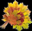 букет листьев клена, желтый кленовый лист, лист кленового дерева, осень, лист клена, канадский клен, канада, yellow maple leaf, maple tree leaf, autumn, maple leaf, canadian maple, canada, gelb ahornblatt, ahornblatt baum, herbst, ahornblatt, roter ahorn, kanada, feuille jaune d'érable, arbre de la feuille d'érable, automne, feuille d'érable, l'érable rouge, le canada, клен
