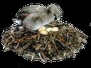 гнездо, яйцо, птица в гнезде, eggs, bird nest, nest, eier, vogelnest, nid, oeufs, nid d'oiseau, huevos, nidos de aves, nido, le uova, nido di uccello, ninho, ovos, ninho de pássaro
