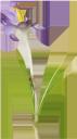голубой цветок, садовые цветы, зеленое растение, blue flower, garden flowers, green plant, blaue blume, garten blumen, grüne pflanze, fleur bleue, fleurs de jardin, plante verte, flores del jardín, fiore blu, fiori da giardino, pianta verde, flor azul, flores de jardim, planta verde, синя квітка, садові квіти, зелена рослина