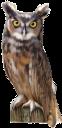 фауна, птицы, сова, филин, bird, owl, eagle owl, vogel, eule, uhu, faune, oiseau, hibou, hibou grand-duc, pájaro, búho, búho real, uccello, gufo, gufo reale, fauna, pássaro, águia, coruja