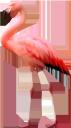 фауна, птицы, розовый фламинго, bird, pink flamingo, vogel, rosa flamingo, faune, oiseau, flamant rose, pájaro, flamenco rosado, uccello, fenicottero rosa, fauna, pássaro, flamingo rosa
