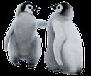 пингвин, маленький пингвин, детеныш пингвина, penguin, little penguin, baby penguin, pinguin, kleinen pinguin, baby-pinguin, pingouin, petit pingouin, bébé pingouin, pingüino, pequeño pingüino, pingüino del bebé, pinguino, piccolo pinguino, bambino pinguino, pinguim, pouco, pinguim do bebê