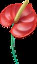 антуриум, цветок антуриума, красный цветок, тропические цветы, распустившийся цветок, зеленое растение, цветы, флора, anthurium flower, red flower, tropical flowers, blossoming flower, green plant, flowers, anthuriumblume, rote blume, tropische blumen, blühende blume, grüne pflanze, blumen, fleur d'anthurium, fleur rouge, fleurs tropicales, fleur épanouie, plante verte, fleurs, flore, flor de anthurium, flor roja, flores tropicales, flor en flor, anthurium, anthurium fiore, fiore rosso, fiori tropicali, fiore che sboccia, pianta verde, fiori, antúrio, flor vermelha, flores tropicais, flor desabrochando, planta verde, flores, flora, антуріум, квітка антуріум, червона квітка, тропічні квіти, розквітла квітка, зелена рослина, квіти