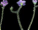 синий цветок, василек, полевые цветы, зеленое растение, blue flower, green plant, blaue blume, kornblume, wildblumen, grüne pflanze, fleur bleue, fleurs sauvages, plante verte, wildflowers, fiore blu, fiori di campo, pianta verde, flor azul, cornflower, flores silvestres, planta verde, синя квітка, волошка, польові квіти, зелена рослина