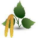 лист берёзы, зеленый лист, берёза, birch leaf, green leaf, birch, birkenblatt, grünes blatt, birke, feuille de bouleau, feuille verte, bouleau, hoja de abedul, hoja verde, abedul, foglie di betulla, foglia verde, betulla, folhas de bétula, folha verde, vidoeiro, лист берези, зелений лист, береза