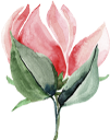 акварельные цветы, цветок, флора, watercolor flowers, flower, aquarellblumen, blume, aquarelle fleurs, fleur, flore, flores de acuarela, fiori ad acquerelli, fiori, flores em aquarela, flor, flora, акварельні квіти, квітка