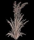куст зеленой травы, зеленая трава, зеленое растение, green grass, green plant, grünes gras, grünpflanze, herbe verte, plante verte, hierba verde, erba verde, pianta verde, grama verde, planta verde