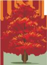 осеннее дерево, осень, красное дерево, лиственное дерево, зеленое растение, herbst baum, herbst, mahagoni, laubbaum, grüne pflanze, arbre d'automne, automne, acajou, flore, arbre à feuilles caduques, plante verte, árbol de otoño, otoño, caoba, árbol de hoja caduca, albero autunnale, autunno, mogano, albero deciduo, pianta verde, árvore, outono, mogno, flora, árvore caduca, planta verde, осіннє дерево, осінь, червоне дерево, флора, листяне дерево, зелена рослина