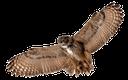 сова, филин, птица, eule, uhu, vogel, hibou, aigle, oiseau, búho, búho real, ave, civetta, gufo reale, uccello, coruja, águia, pássaro