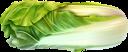 пекинская капуста, капуста, зеленый, овощи, chinese cabbage, cabbage, green, vegetables, chinakohl, kohl, grün, gemüse, chou chinois, chou, vert, légumes, repollo chino, repollo, vegetales, cavolo cinese, cavolo, verdure, repolho chinês, repolho, verde, legumes, пекінська капуста, зелений, овочі