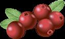 клюква, красная ягода, ягода клюквы, красный, red berry, cranberry berry, red, rote beeren, cranberry-beere, rot, canneberge, baie rouge, baie de canneberge, rouge, arándano rojo, baya roja, bayas de arándano, rojo, bacca rossa, mirtillo rosso, rosso, cranberry, baga vermelha, baga de cranberry, vermelho, журавлина, червона ягода, ягода журавлини, червоний
