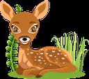 животные, олененок, косуля, animals, deer, roe deer, tiere, hirsche, rehe, animaux, cerfs, chevreuils, animales, ciervos, corzos, animali, cervi, caprioli, animais, veado, corça, тварини, оленя