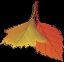 желтый лист, осенняя листва, осень, красный лист, yellow leaf, autumn foliage, autumn, red leaf, gelbes blatt, herbstlaub, herbst, rotes blatt, feuille jaune, feuillage d'automne, automne, feuille rouge, hoja amarilla, follaje de otoño, caída, hoja roja, foglia gialla, fogliame autunnale, cadere, foglia rossa, folha amarela, folhagem de outono, queda, folha vermelha, жовтий лист, осіннє листя, осінь, червоний лист