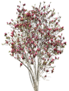 флора, лиственное дерево, зеленое растение, цветущее дерево, весна, deciduous tree, green plant, flowering tree, spring, laubbaum, grüne pflanze, blühender baum, frühling, flore, arbre à feuilles caduques, plantes vertes, arbre en fleurs, printemps, árbol de hoja caduca, árbol en flor, la primavera, albero a foglie decidue, pianta verde, albero fiorito, flora, árvore de folha caduca, planta verde, árvore de florescência, primavera