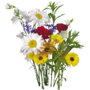 букет цветов, ромашки белые, ромашки желтые, васильки, роза садовая красная, колокольчик молочноцветковый, bouquet of flowers, white daisies, yellow daisies, cornflowers, garden red rose, bellflower bell, blumenstrauß, gänseblümchen weißes gänseblümchen gelb, kornblume, rose rot, campanula lactiflora garten, bouquet de fleurs, des marguerites de marguerite jaune, centaurée, roseraie rouge, ramo de flores, margaritas margarita blanca amarillo, harina de maíz, jardín de rosas de color rojo, mazzo di fiori, margherite margherita bianco giallo, fiordaliso, rosa giardino rosso, campanula lactiflora, buquê de flores, margaridas margarida branca amarelo, cornflower, jardim de rosas vermelho, lactiflora campânula