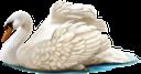 фауна, птицы, лебедь, bird, swan, vogel, schwan, faune, oiseau, cygne, pájaro, uccello, cigno, fauna, pássaro, cisne