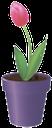 вазон, цветочный горшок, цветок тюльпан, flower pot, flower tulip, blumentopf, blume tulpe, vase, pot de fleur, fleur de tulipe, florero, maceta, flor del tulipán, vaso di fiori, tulipano, vaso, vaso de flores, tulipa flor