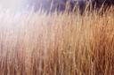 фон природа, текстура природа, натура, background nature, hintergrund natur, textur natur, natur, fond nature, texture nature, nature, naturaleza de fondo, naturaleza de textura, naturaleza, natura di sfondo, natura di trama, natura, natureza de fundo, natureza de textura, natureza