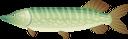 щука, речная рыба, рыбы, морепродукты, pike, river fish, fish, seafood, hecht, flussfisch, fisch, meeresfrüchte, brochet, poisson de rivière, poisson, fruits de mer, lucio, pez de río, pescado, marisco, luccio, pesce di fiume, pesce, frutti di mare, pique, peixe do rio, peixe, frutos do mar, річкова риба, риби, морепродукти