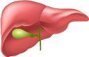 медицина, органы человека, анатомия, печень, внутренности человека, части тела, тело человека, medicine, human organs, anatomy, liver, the insides of a person, body parts, a human body, medizin, menschliche organe, anatomie, leber, das innere einer person, körperteile, ein menschlicher körper, la médecine, les organes humains, l'anatomie, le foie, l'intérieur d'une personne, les parties du corps, un corps humain, órganos humanos, anatomía, hígado, el interior de una persona, partes del cuerpo, un cuerpo humano, organi umani, fegato, interno di una persona, parti del corpo, un corpo umano, medicina, órgãos humanos, anatomia, fígado, o interior de uma pessoa, partes do corpo, um corpo humano, органи людини, анатомія, печінка, нутрощі людини, частини тіла, тіло людини